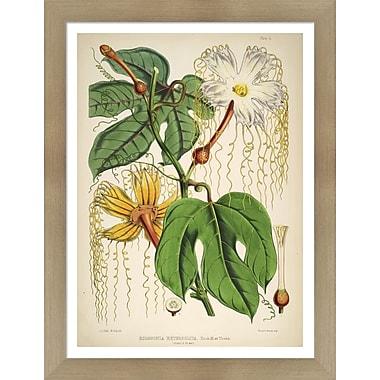Evive Designs Vintage Botanical III by Julia Kearney Framed Painting Print
