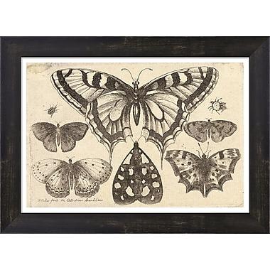 Evive Designs Vintage Butterfly II by Julia Kearney Framed Painting Print