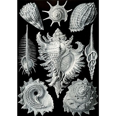 Evive Designs Vintage Seashells 'II' by Julia Kearney Graphic Art Print
