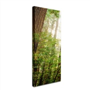 "Trademark Ariane Moshayedi ""Muir Woods"" Multi Panel Art Set Part 2, 8"" x 24"""