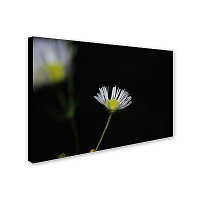"Trademark Monica Fleet ""Light in the Dark"" Gallery-Wrapped Canvas Art, 12"" x 19"""