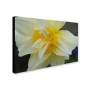 "Trademark Monica Fleet ""Sparkling Truth"" Gallery-Wrapped Canvas Arts"