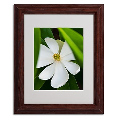 Trademark Kurt Shaffer White Matte W/Wood Frame