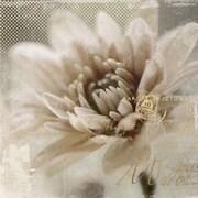 "Yosemite ""Blooming Softly II"" Canvas Art"