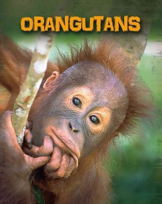 Orangutans (Living in the Wild: Primates)