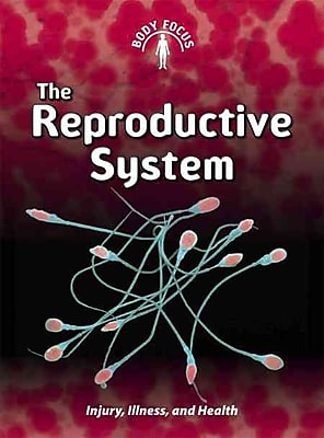 The Reproductive System (Body Focus)