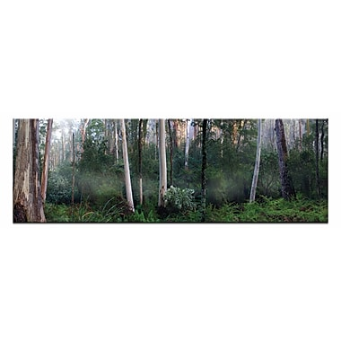 Artist Lane Tranquil Forest by Andrew Brown Photographic Print on Wrapped Canvas in Green