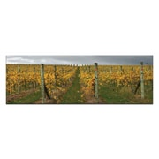 Artist Lane De-vine by Andrew Brown Framed Photographic Print on Wrapped Canvas