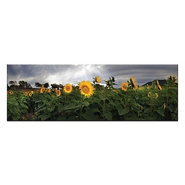 Artist Lane A Little Ray Of Sunshine by Andrew Brown Framed Photographic Print on Wrapped Canvas