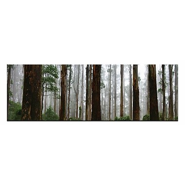 Elderly Giants, Dandenong Ranges by Andrew Brown Framed Photographic Print on Wrapped Canvas