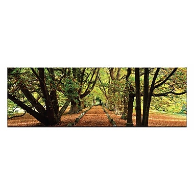 Artist Lane Golden Grove by Andrew Brown Framed Photographic Print on Wrapped Canvas