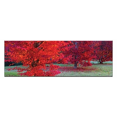 Artist Lane Bright Reds by Andrew Brown Framed Photographic Print on Wrapped Canvas