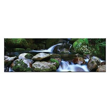 Artist Lane Moss Heaven by Andrew Brown Photographic Print on Canvas