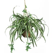 Nearly Natural Spider Hanging Plant in Basket (6607)