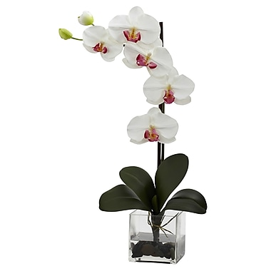 Nearly Natural 1324-WH Giant Phal Arrangements, White