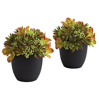 Nearly Natural 4963 Mixed Succulent in Black Set of 2 Plant in Pot