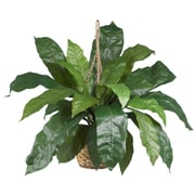 Nearly Natural 6775 Large Birds Nest Fern Hanging Plant in Basket