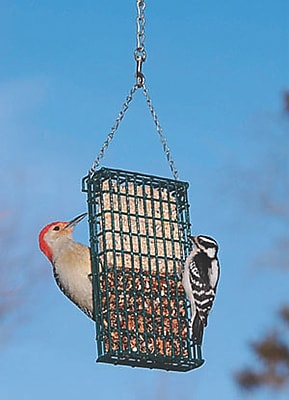 Droll Yankees Double Cake Suet Bird Feeder (WYF078277030944) photo
