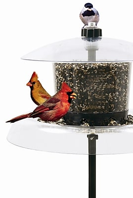 Droll Yankees Jagunda Squirrel-Proof Tube Bird Feeder (WYF078277031027) photo