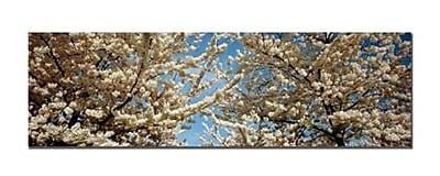 Trademark Fine Art Floral Escape by Preston-Ready to Hang Art 10x32 Inches