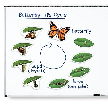 Learning Resources® Giant Magnetic Butterfly Life Cycle