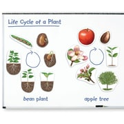 Learning Resources® Giant Magnetic Plant Life Cycles