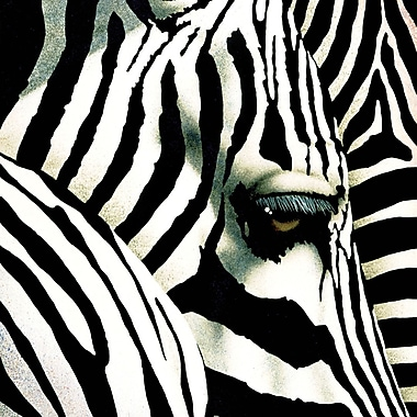 Portfolio Canvas ''Do Zebras Dream In Color'' Painting Print on Wrapped Canvas