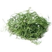 Super Moss 26922 32 oz. Spanish Moss Preserved