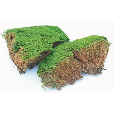 Super Moss 21539 Preserved Mood Moss, 8 oz.