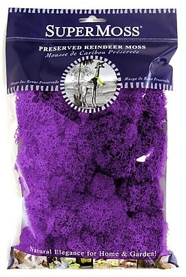 Super Moss 25124 Reindeer Moss, Purple