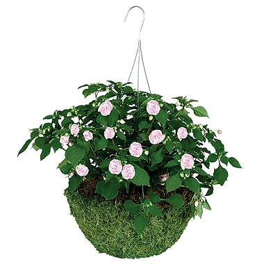 "Gardman R475 14"" Sphagnum Moss Hanging Basket with 3 Wire Hanger, Green"