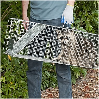 Havahart Steel Animal Two-Door Large Raccoon And Opossum Cage Trap