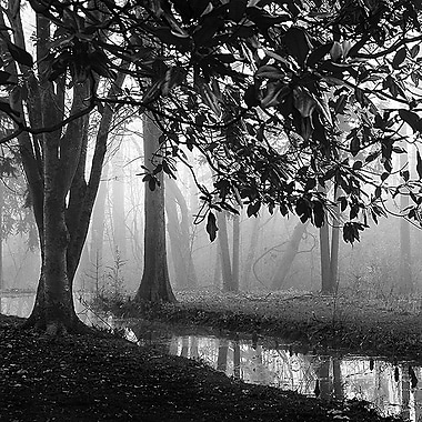 Printfinders Woodland No. 1 by Nicholas Bell Photographic Print on Canvas; 30'' x 30''