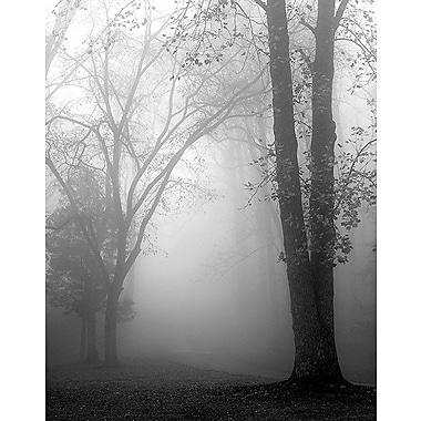 Printfinders November Fog by Nicholas Bell Photographic Print on Canvas; 28'' x 22''