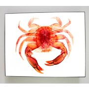 Radiant Art Studios X-ray Designs Red Crab Graphic Art Plaque