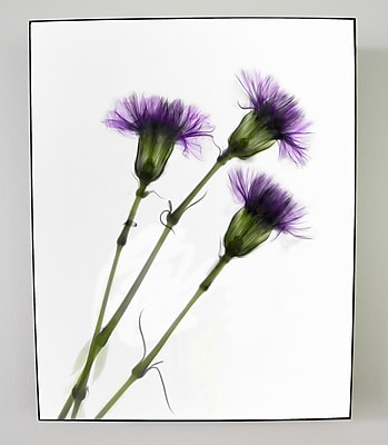 Radiant Art Studios X-ray Designs Carnations Graphic Art Plaque