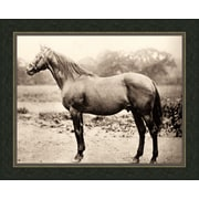 Melissa Van Hise Horse ll Framed Photographic Print