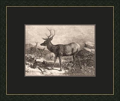 Melissa Van Hise Forest Dwellers VII Framed Graphic Art