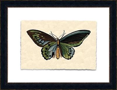 Melissa Van Hise Petite Papilia III Framed Graphic Art