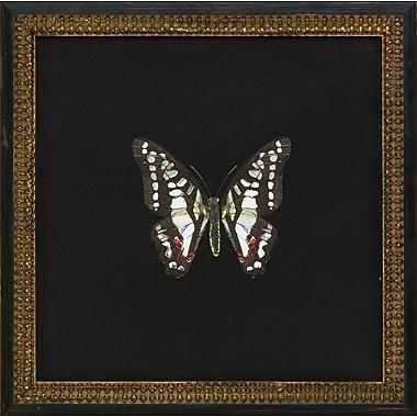 Melissa Van Hise Butterflies III Framed Graphic Art