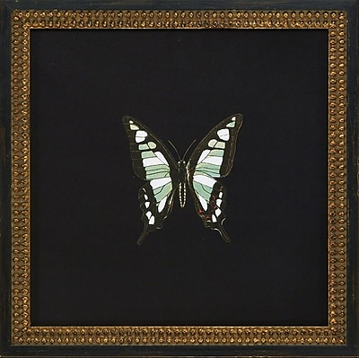 Melissa Van Hise Butterflies IV Framed Graphic Art