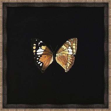 Melissa Van Hise Butterflies VI Framed Graphic Art