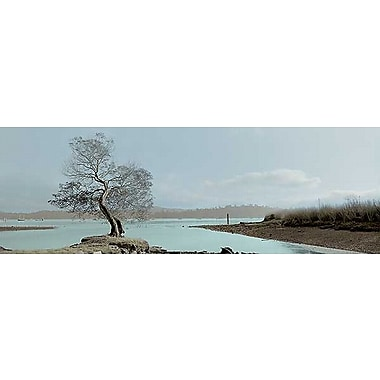 Printfinders Lagoon Oak Tree by Alan Blaustein Photographic Print on Wrapped Canvas