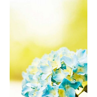 Printfinders Hydrangea by Carolyn Cochrane Photographic Print on Wrapped Canvas