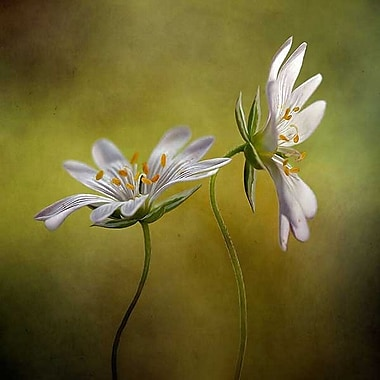 Printfinders Echo by Mandy Disher Photographic Print on Wrapped Canvas; 30'' H x 30'' W x 1'' D