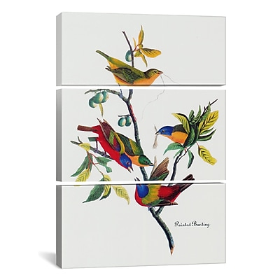 iCanvas Painted Bunting by John James Audubon 3 Piece Painting Print on Wrapped Canvas Set