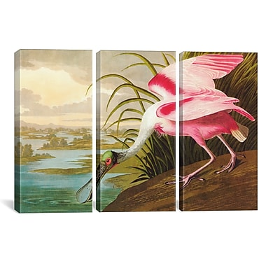 iCanvas Roseate Spoonbill by John James Audubon 3 Piece Painting Print on Wrapped Canvas Set