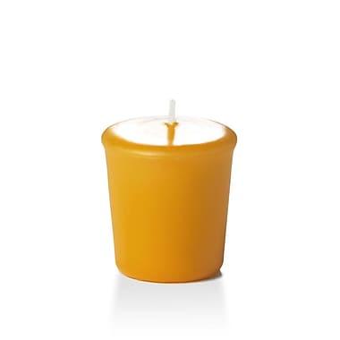 Yummi – Bougies votives inodores, moisson dorée, 15 heures, 144 bougies par boîte