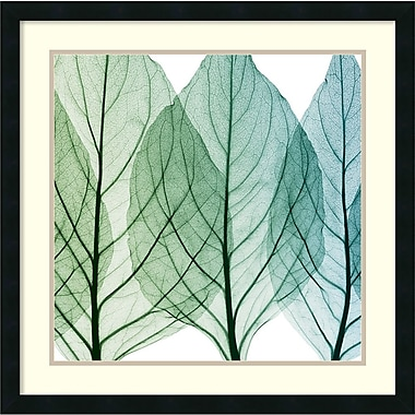 Amanti Art Celosia Leaves II Framed Art Print by Steven N. Meyers, 26