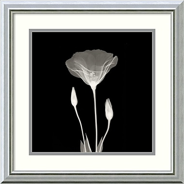 Amanti Art Poppy in Lace Framed Art Print, 18
